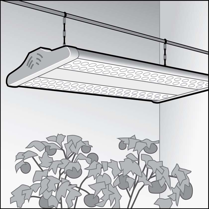 An illustration of a LEDs for Indoor Growing